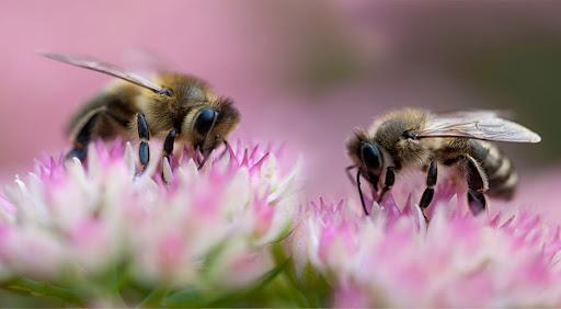 """""""Zakup węzy pszczelej – poprawa warunków sanitarnych rodzin pszczelich"""""""